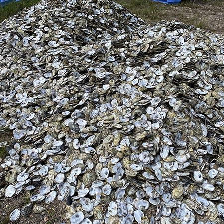 Picture for oyster project media release.