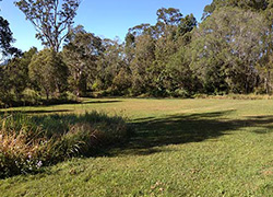 Carruthers Natural Amenity Reserve, Carruthers Court, Cooroy