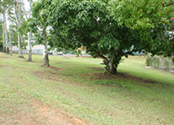 Police Station Park, Myall Street, Cooroy